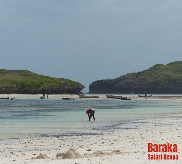 escursione-isola-mangrovie-barakasafarikenya-43