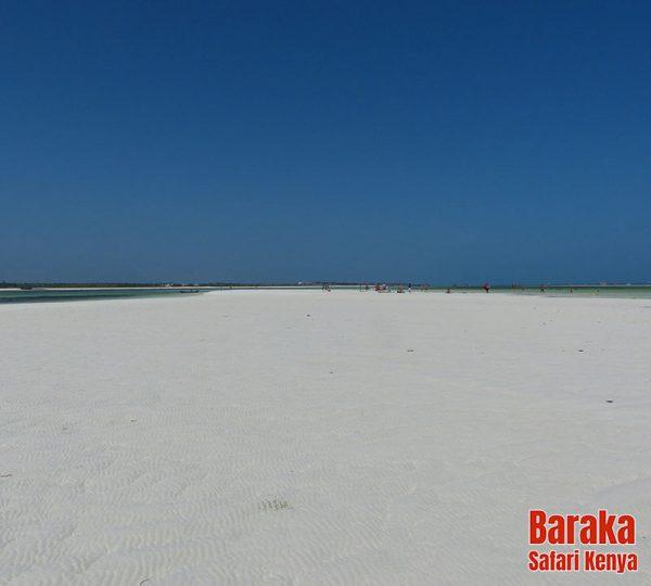 escursione-isola-mangrovie-barakasafarikenya-48