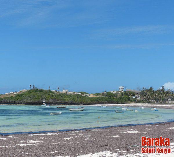 escursione-isola-mangrovie-barakasafarikenya-51