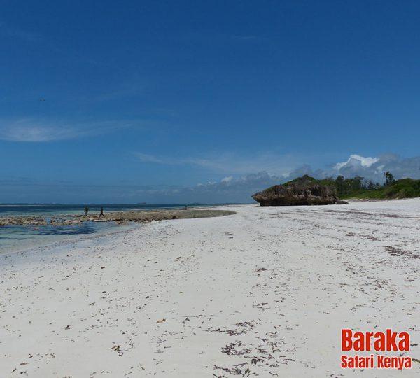 escursione-isola-mangrovie-barakasafarikenya-53