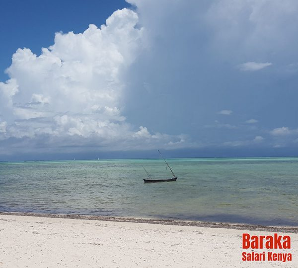 escursione-isola-mangrovie-barakasafarikenya-6
