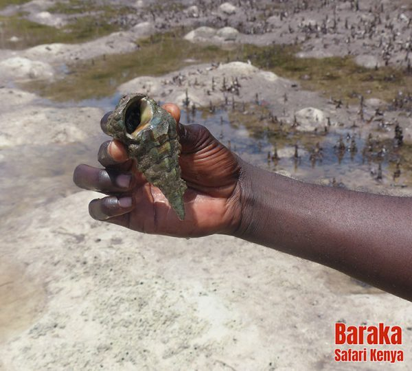 escursione-vita-africana-barakasafarikenya24