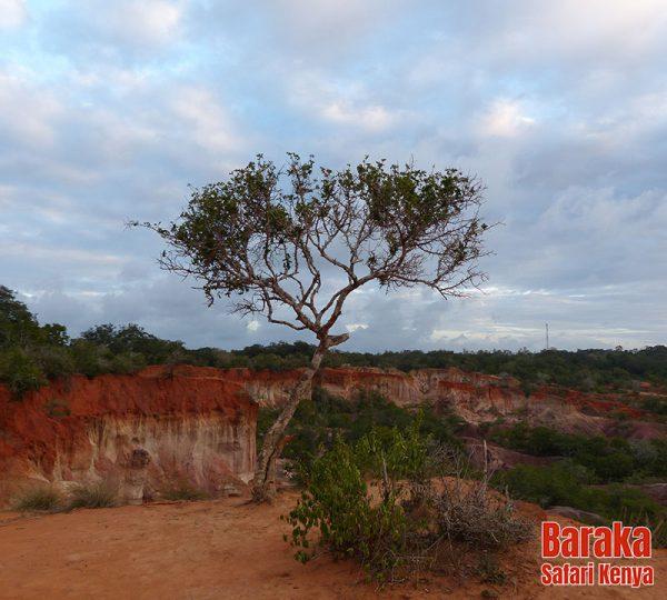 escursione-watamu-marafa-barakasafarikenya-4