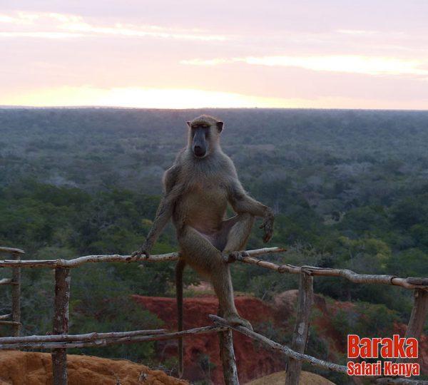 escursione-watamu-marafa-barakasafarikenya-6