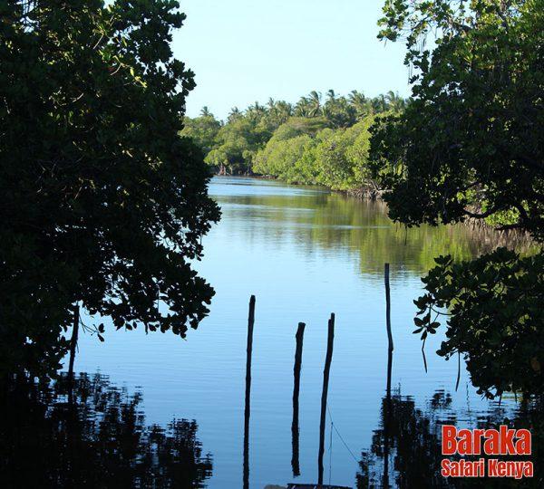 escursione-watamu-mida-creek-barakasafarikenya-1