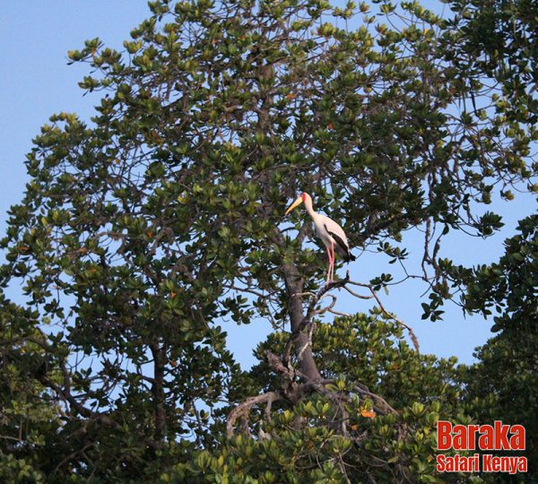 escursione-watamu-mida-creek-barakasafarikenya-10