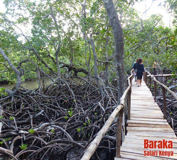escursione-watamu-mida-creek-barakasafarikenya-14