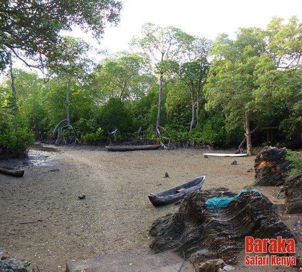 escursione-watamu-mida-creek-barakasafarikenya-15