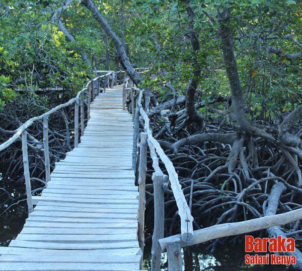 escursione-watamu-mida-creek-barakasafarikenya-2