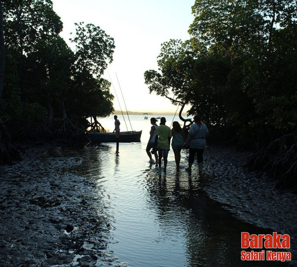 escursione-watamu-mida-creek-barakasafarikenya-5