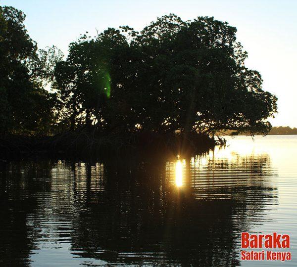 escursione-watamu-mida-creek-barakasafarikenya-6