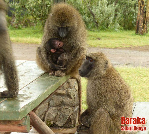 safari-kenya-barakasafarikenya-104