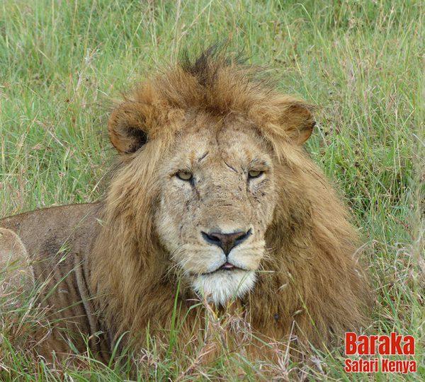 safari-kenya-barakasafarikenya-116