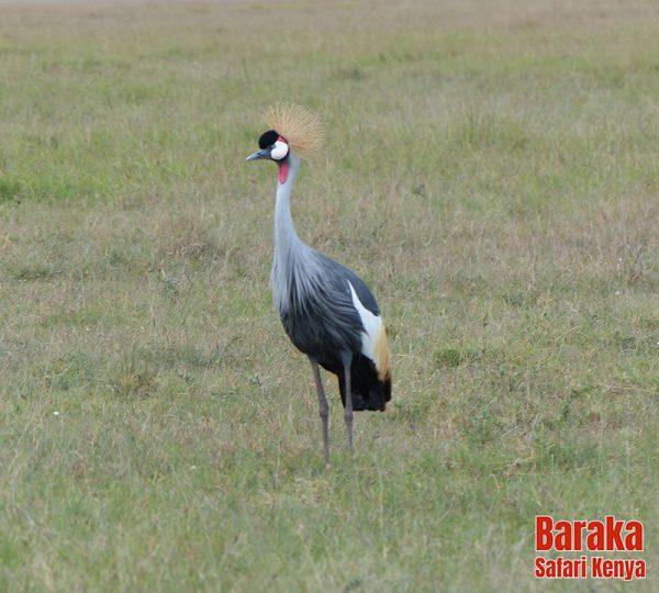 safari-kenya-barakasafarikenya-119