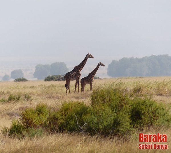 safari-kenya-barakasafarikenya-2