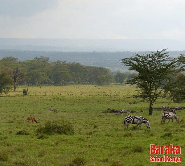 safari-kenya-barakasafarikenya-94
