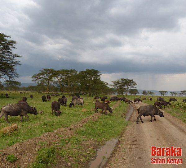 safari-kenya-barakasafarikenya-95