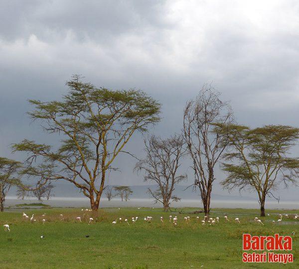 safari-kenya-barakasafarikenya-97