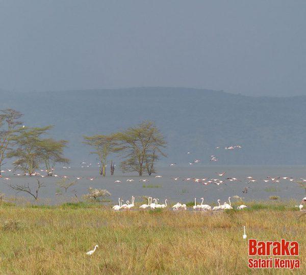 safari-kenya-barakasafarikenya-98