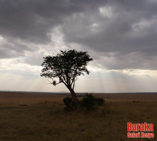 safari-masai-mara-barakasafarikenya-10