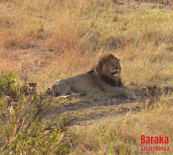 safari-masai-mara-barakasafarikenya-14