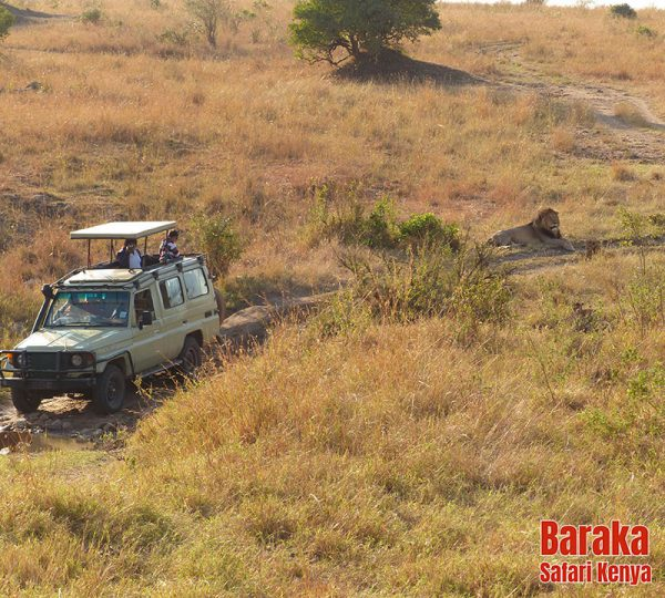 safari-masai-mara-barakasafarikenya-15