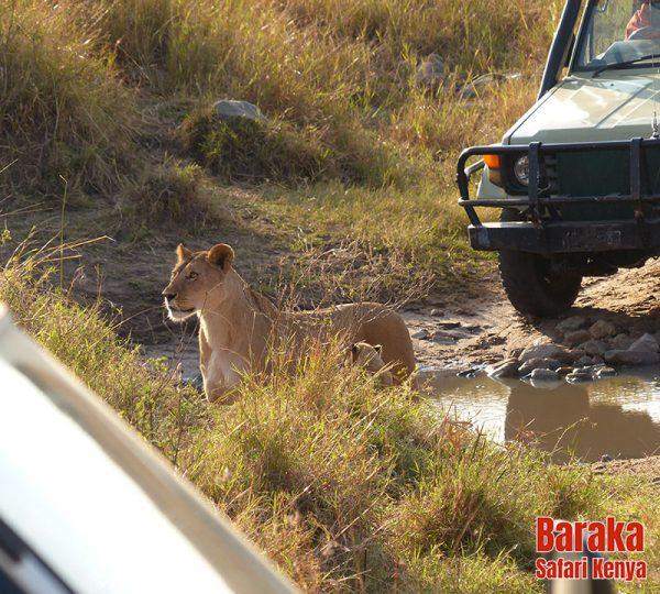 safari-masai-mara-barakasafarikenya-16