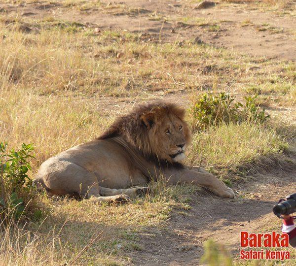 safari-masai-mara-barakasafarikenya-18