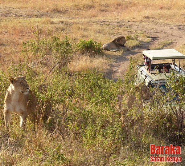 safari-masai-mara-barakasafarikenya-19
