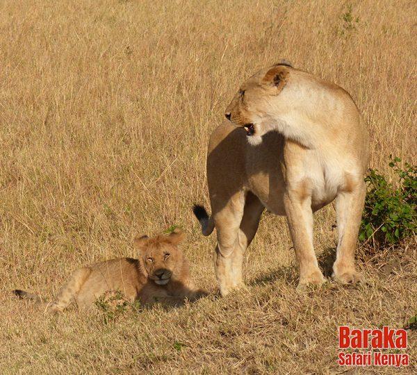 safari-masai-mara-barakasafarikenya-20