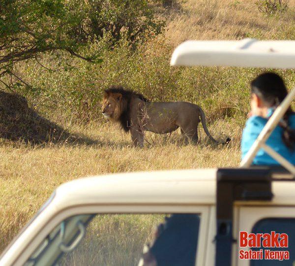 safari-masai-mara-barakasafarikenya-21