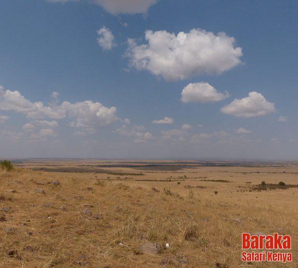 safari-masai-mara-barakasafarikenya-26