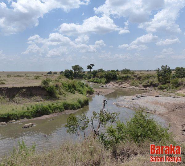 safari-masai-mara-barakasafarikenya-37