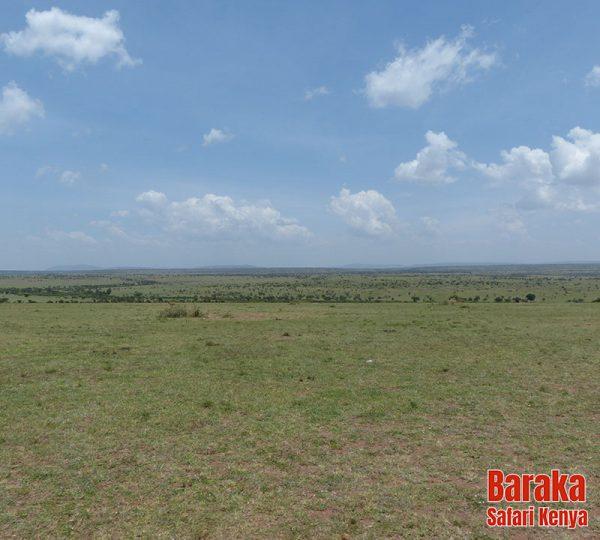 safari-masai-mara-barakasafarikenya-39