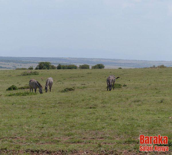 safari-masai-mara-barakasafarikenya-40