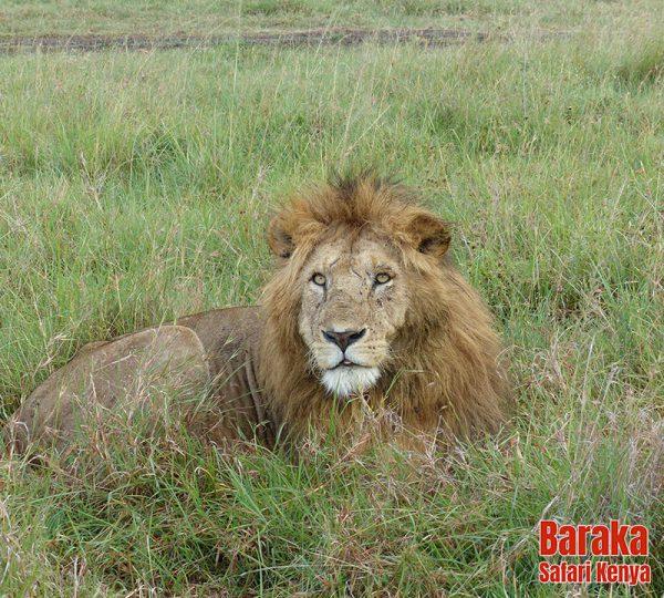 safari-masai-mara-barakasafarikenya-46