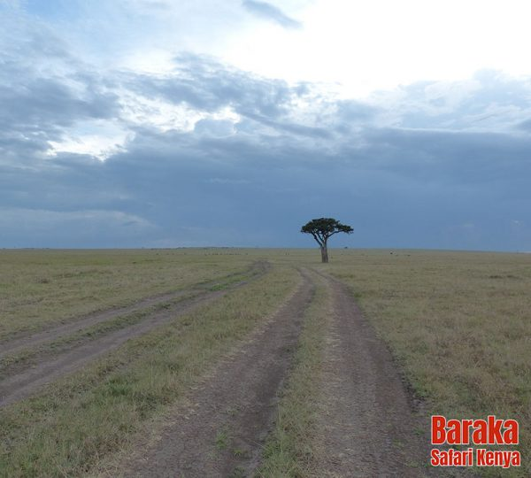 safari-masai-mara-barakasafarikenya-49