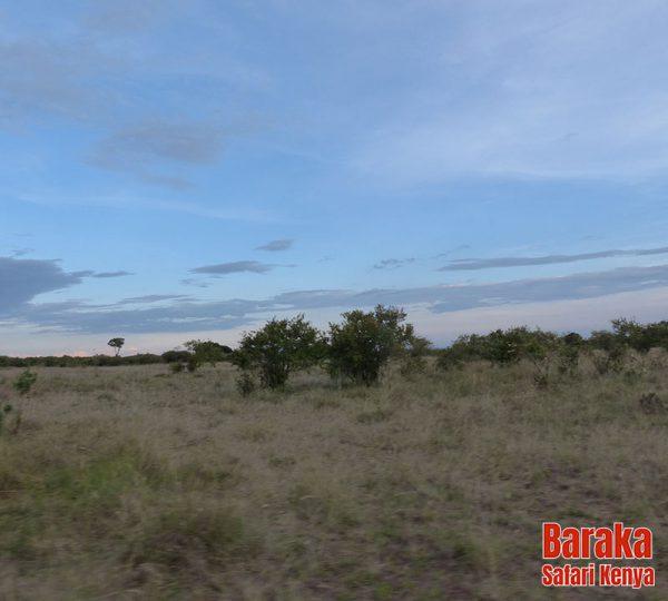 safari-masai-mara-barakasafarikenya-53