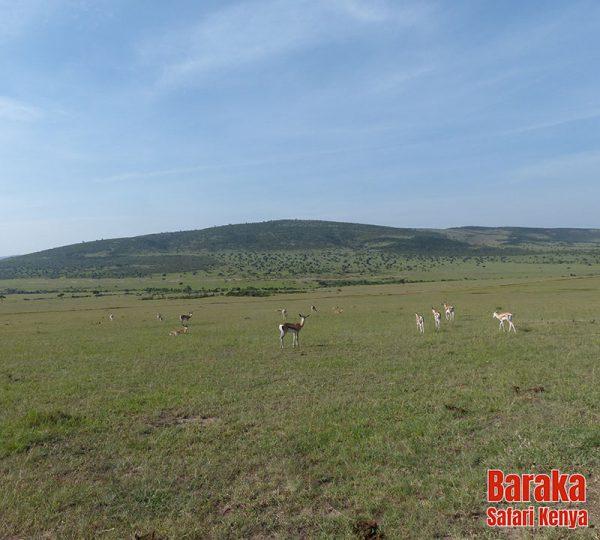 safari-masai-mara-barakasafarikenya-54