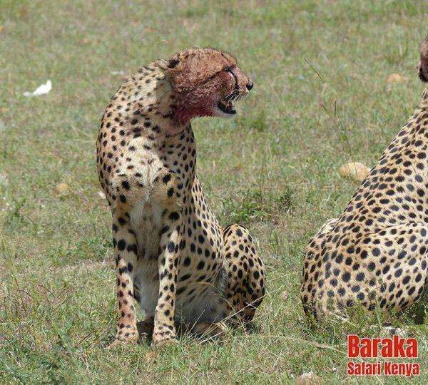 safari-masai-mara-barakasafarikenya-57