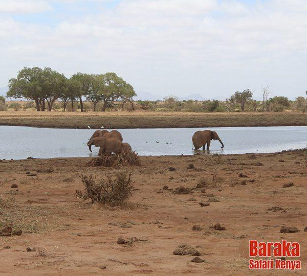 safari-tsavo-est-barakasafarikenya-19