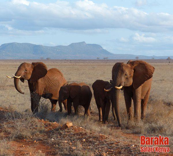 safari-tsavo-est-barakasafarikenya-7