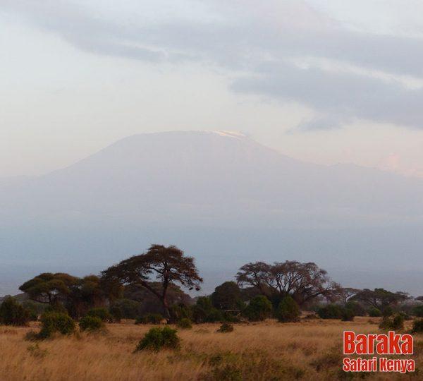 safari-tsavo-est-ovest-amboseli-barakasafarikenya-10