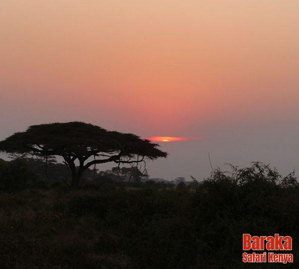 safari-tsavo-est-ovest-amboseli-barakasafarikenya-11