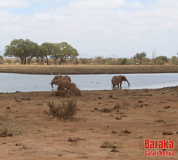 safari-tsavo-est-ovest-amboseli-barakasafarikenya-18