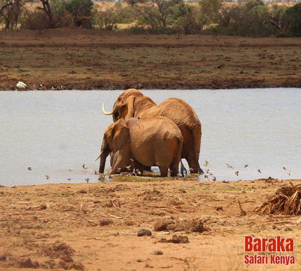 safari-tsavo-est-ovest-amboseli-barakasafarikenya-19