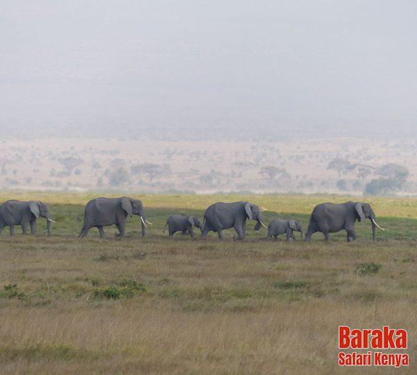safari-tsavo-est-ovest-amboseli-barakasafarikenya-2