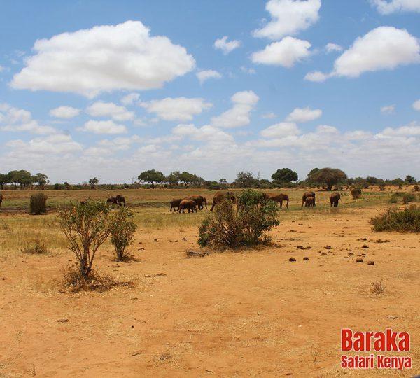 safari-tsavo-est-ovest-amboseli-barakasafarikenya-21