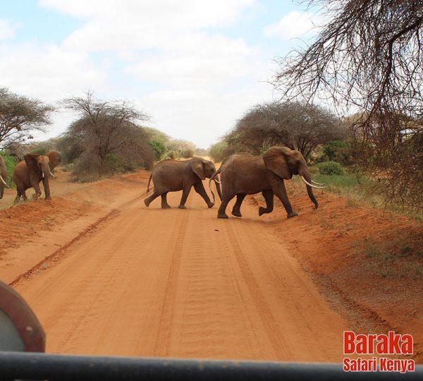 safari-tsavo-est-ovest-amboseli-barakasafarikenya-23