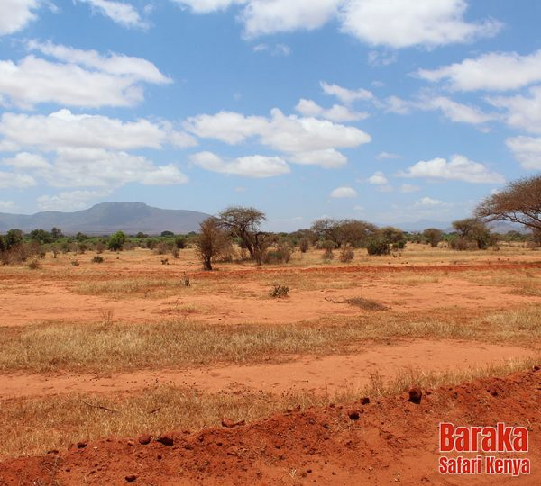 safari-tsavo-est-ovest-amboseli-barakasafarikenya-24